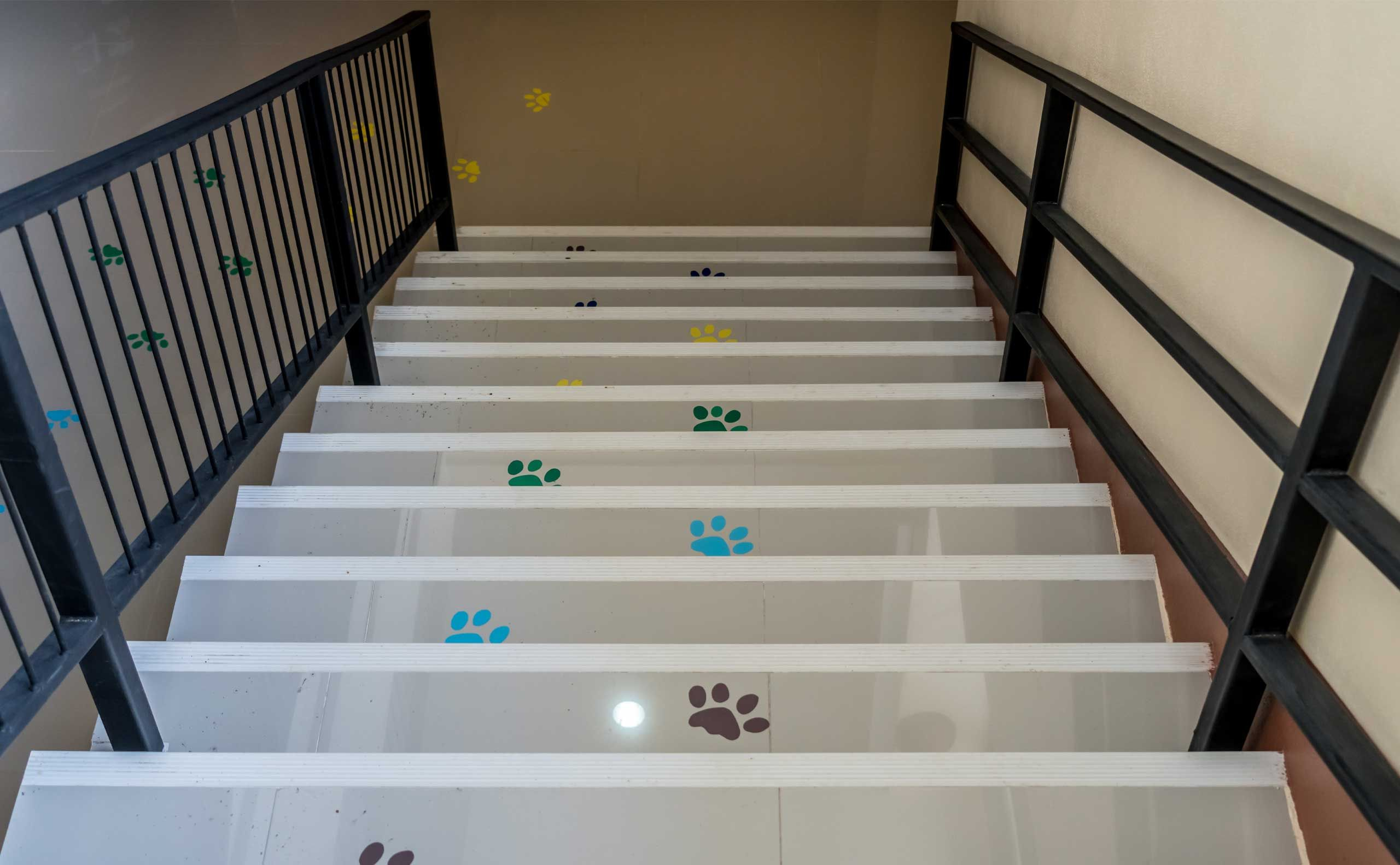Floor decals of pawprints